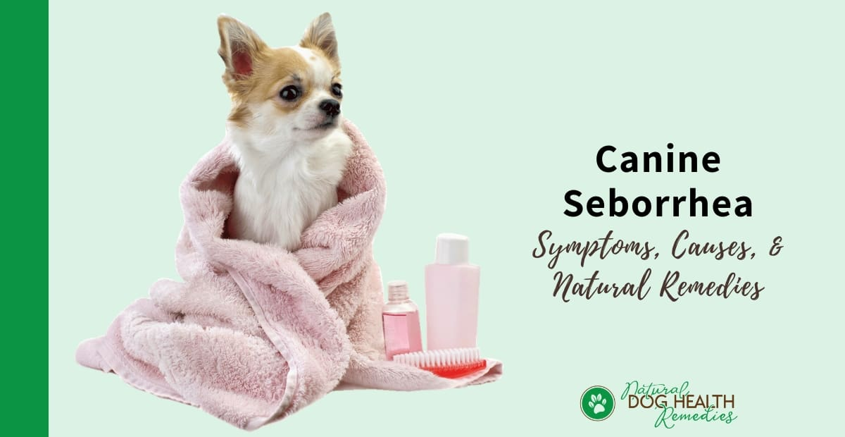 Canine Seborrhea - Causes, Symptoms, & Natural Home Remedies