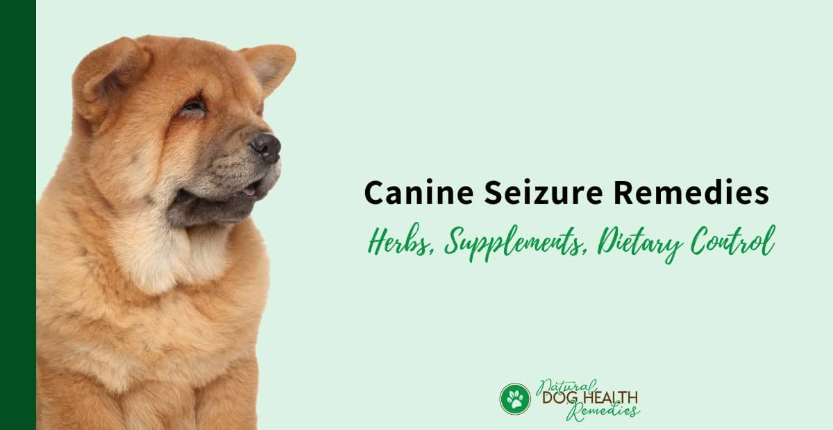 Natural Canine Seizure Remedies | How to Help Bring a Dog Out of a
