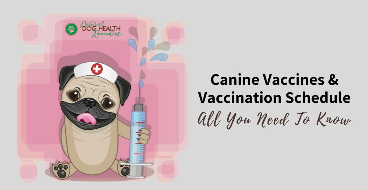 Canine Vaccines and Vaccination