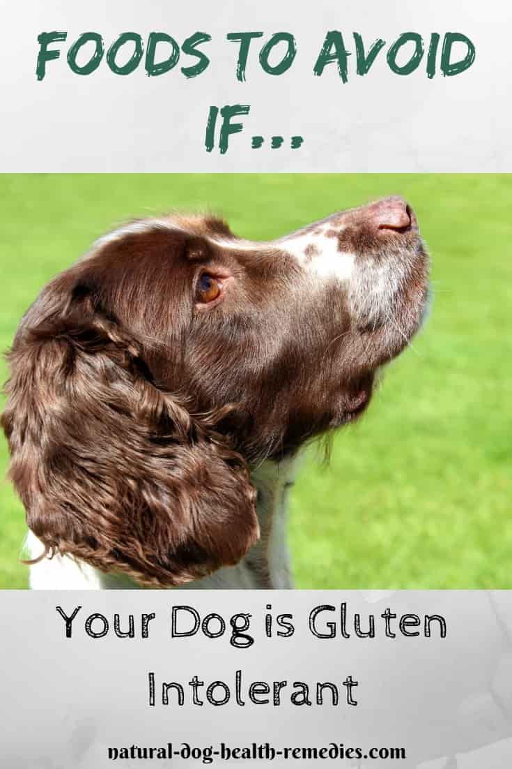 Diet for Celiac Disease in Dogs