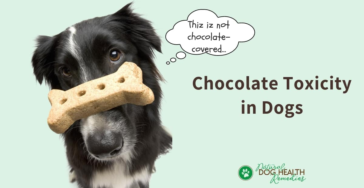 Chcolate Toxicity in Dogs