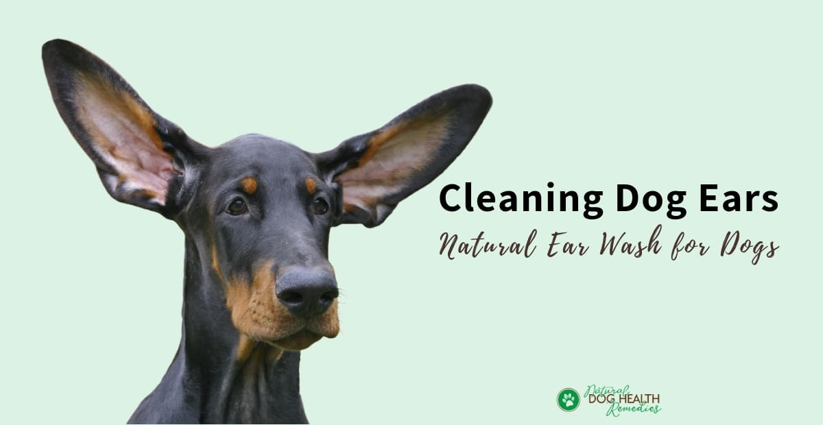 Cleaning Dog Ears