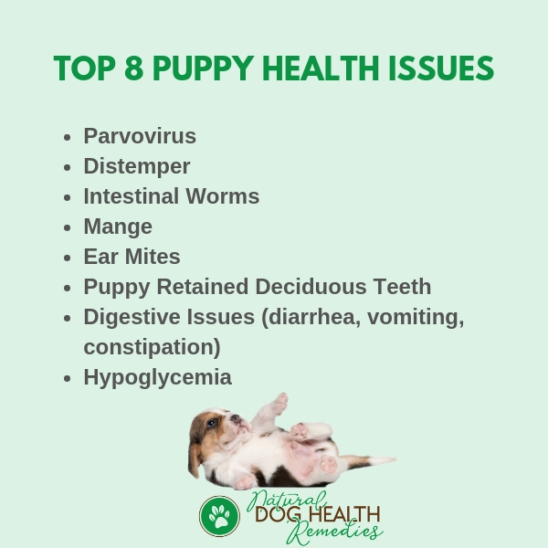 Top 8 Puppy Health Issues