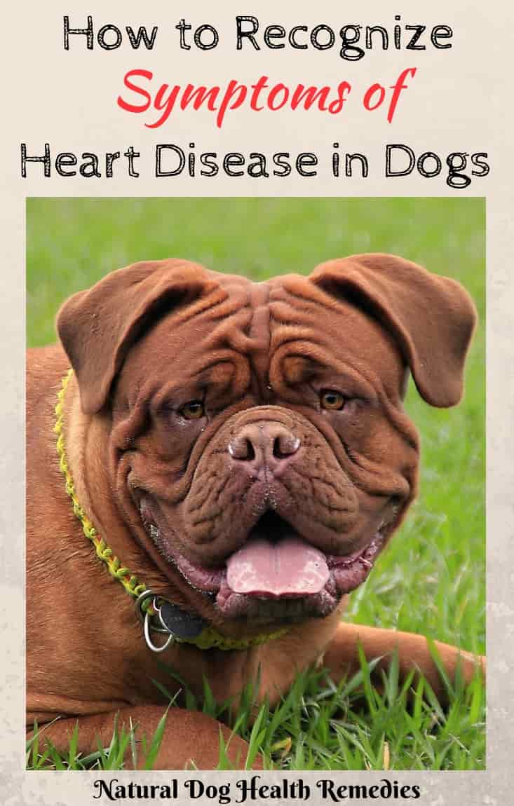 Symptoms of Congestive Heart Failure in Dogs