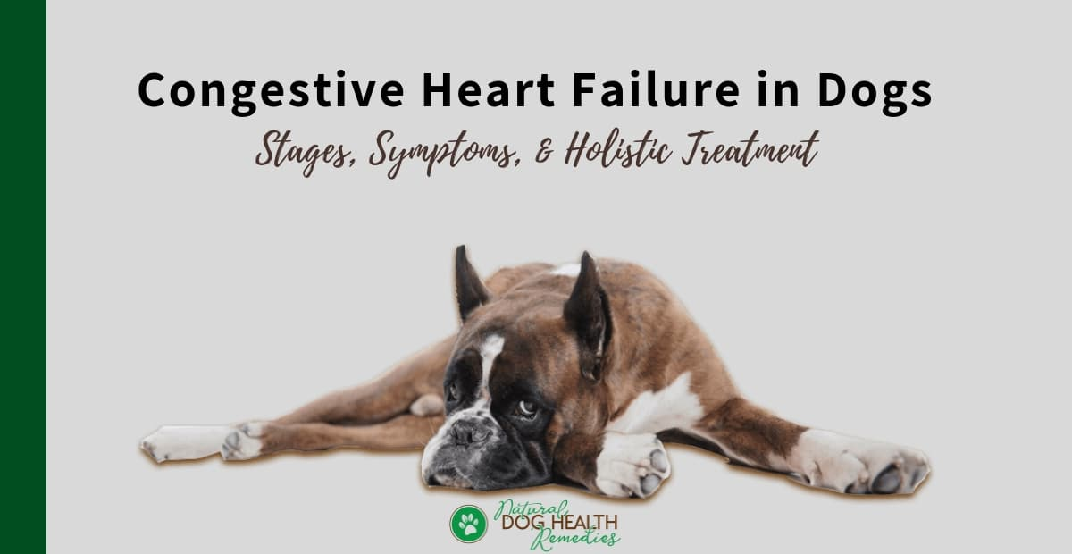 Congestive Heart Failure in Dogs