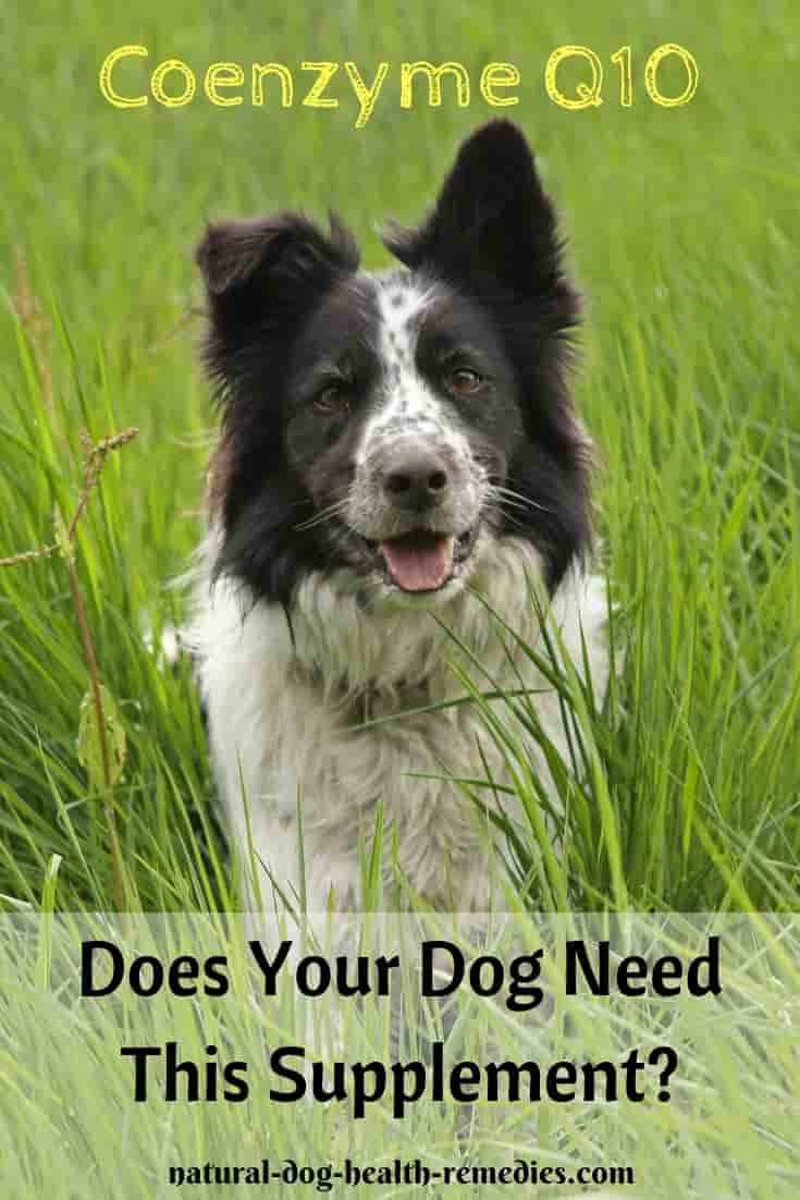Coenzyme Q10 Benefits to Dogs