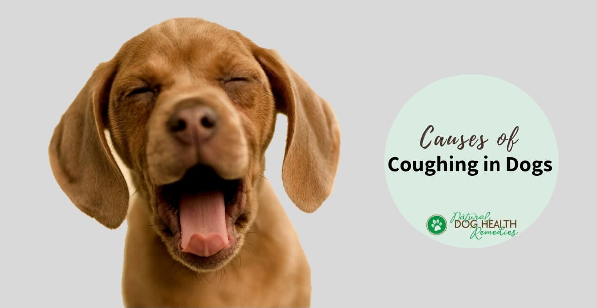 Coughing in Dogs