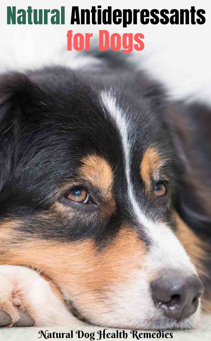 Natural Antidepressants for Dogs