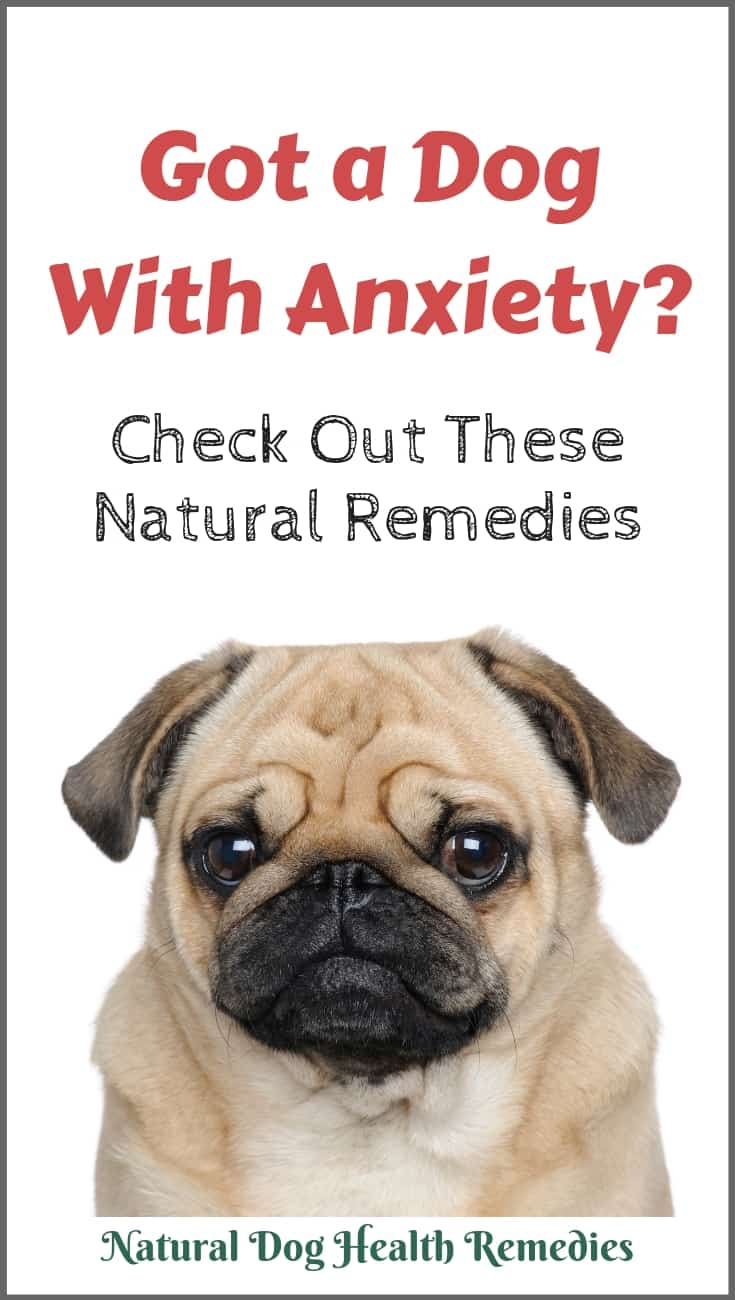 Dog Anxiety Natural Home Remedies | How To Calm an Anxious Dog