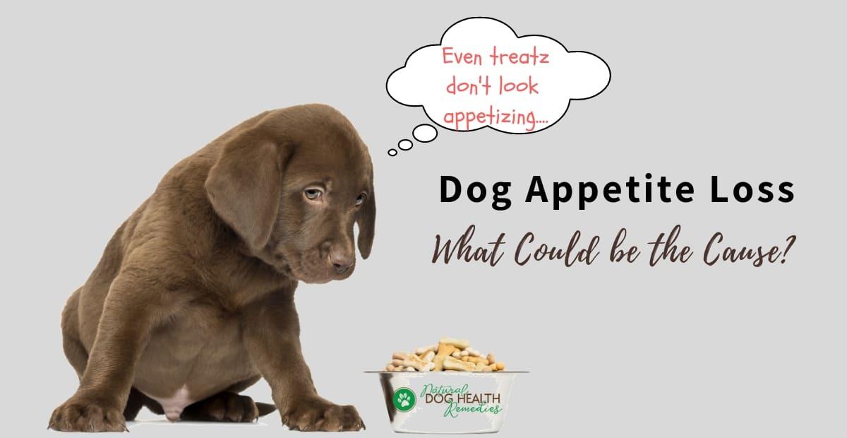 Dog Appetite Loss