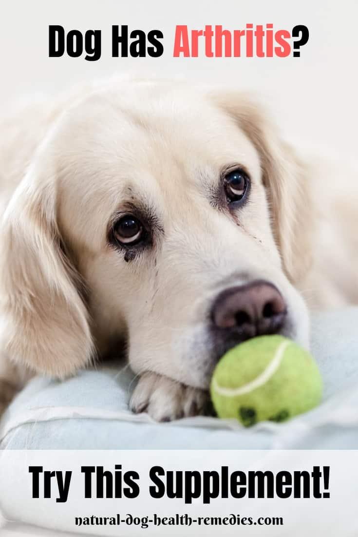 Dog Arthritis Glucosamine