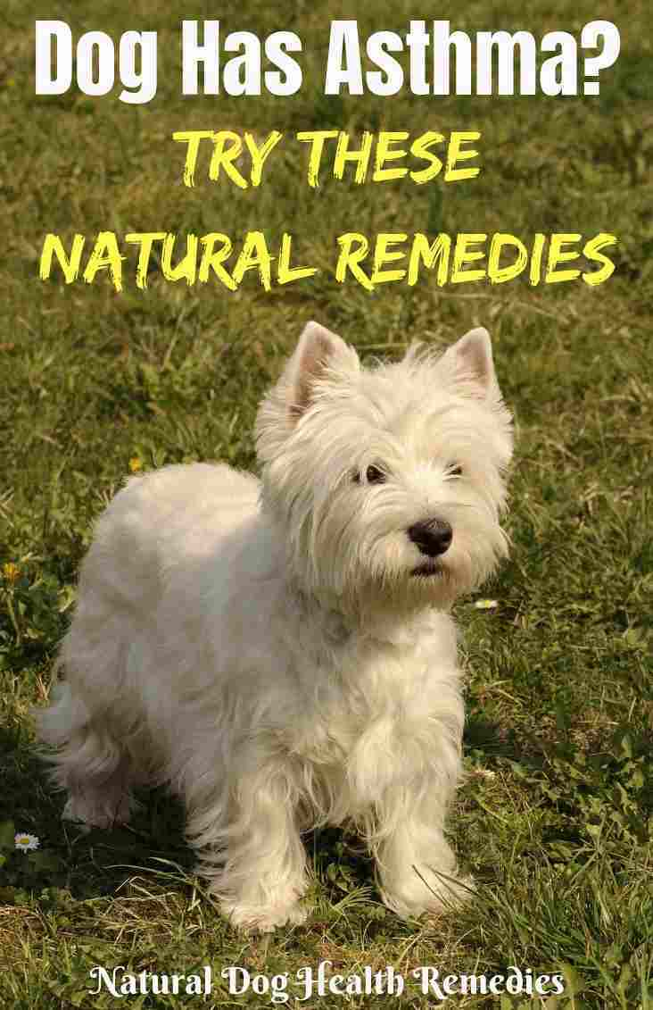 Natural Dog Asthma Remedies