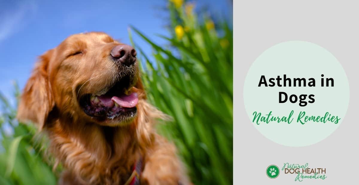 Dog Asthma Remedies