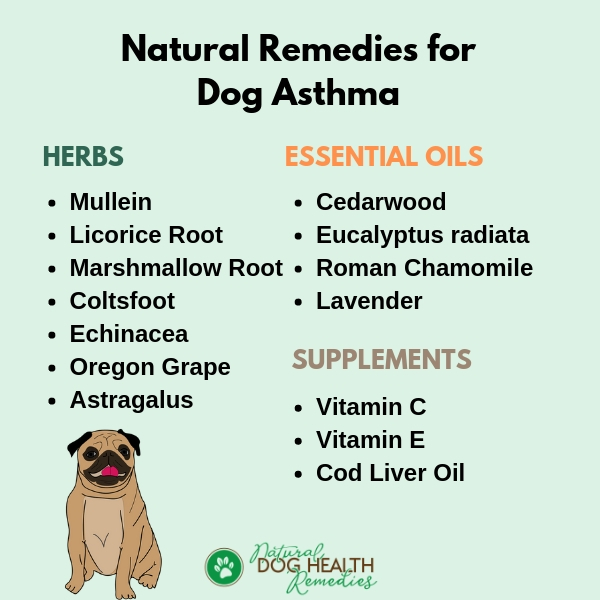 Asthma in Dogs Natural Treatments
