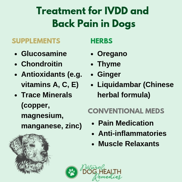 Treatment for IVDD and Back Pain in Dogs