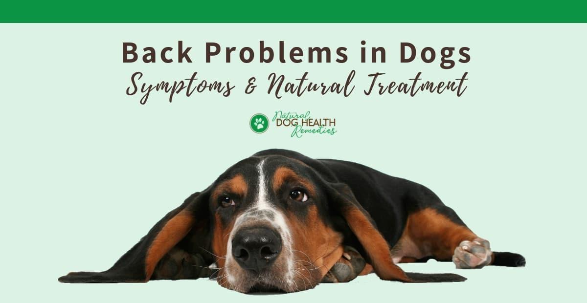 Dog Back Problems
