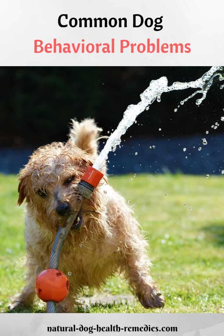 Dog Behavioral Problems