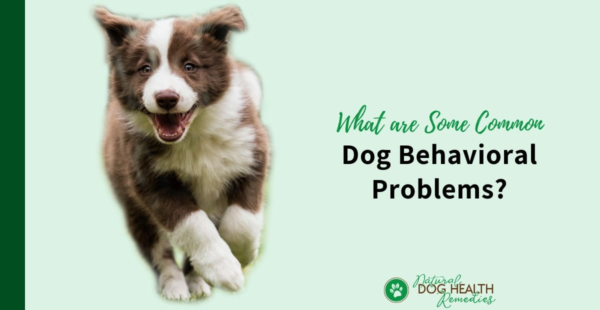 Dog Behavioral Problems