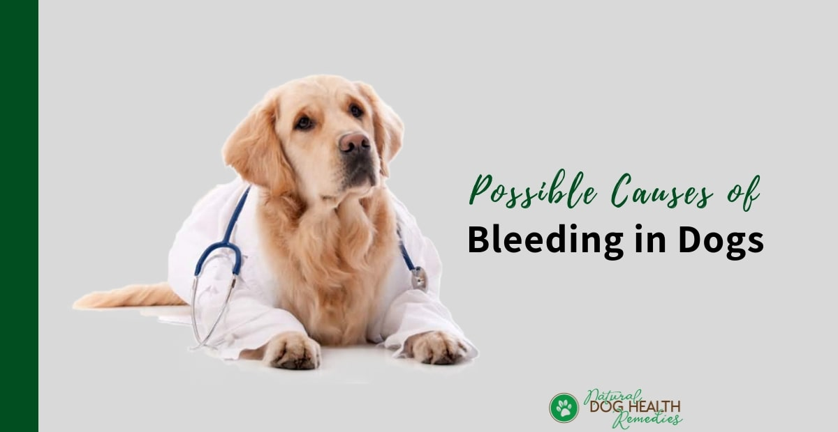 Dog Bleeding
