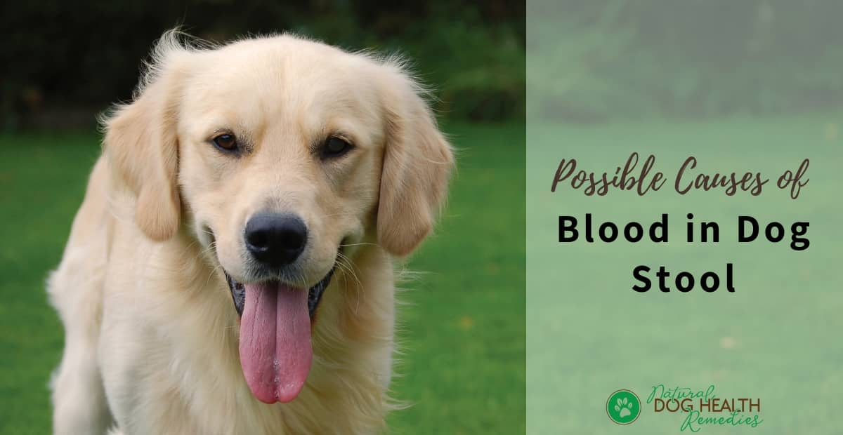 Dog Blood in Stool