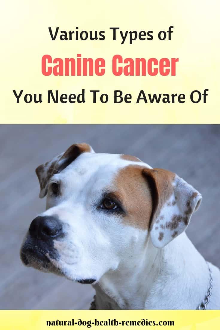 Dog Cancer Types