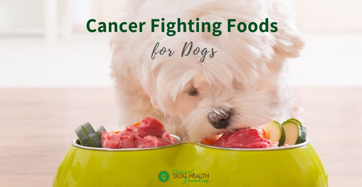 Cancer Fighting Foods for Dogs