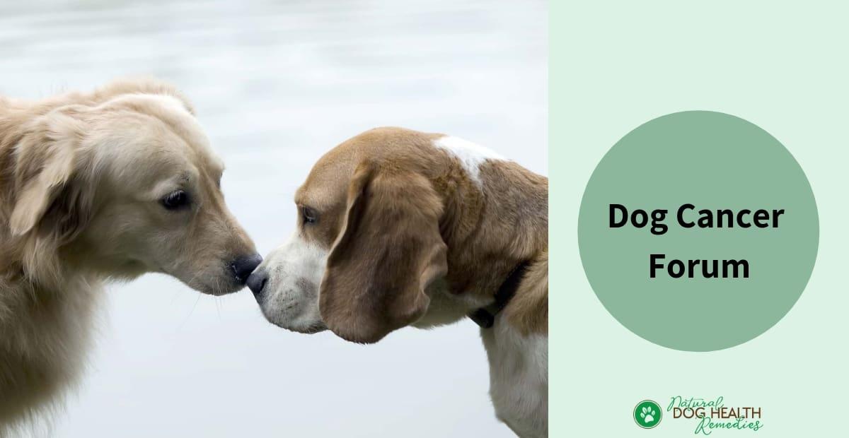 Dog Cancer Forum