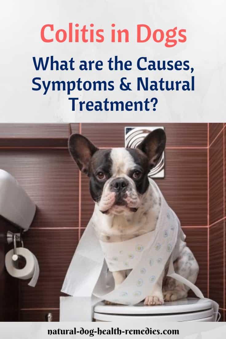 Dog Colitis Natural Remedies