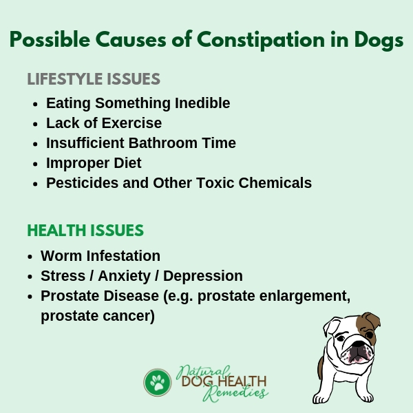 Dog Constipation Causes