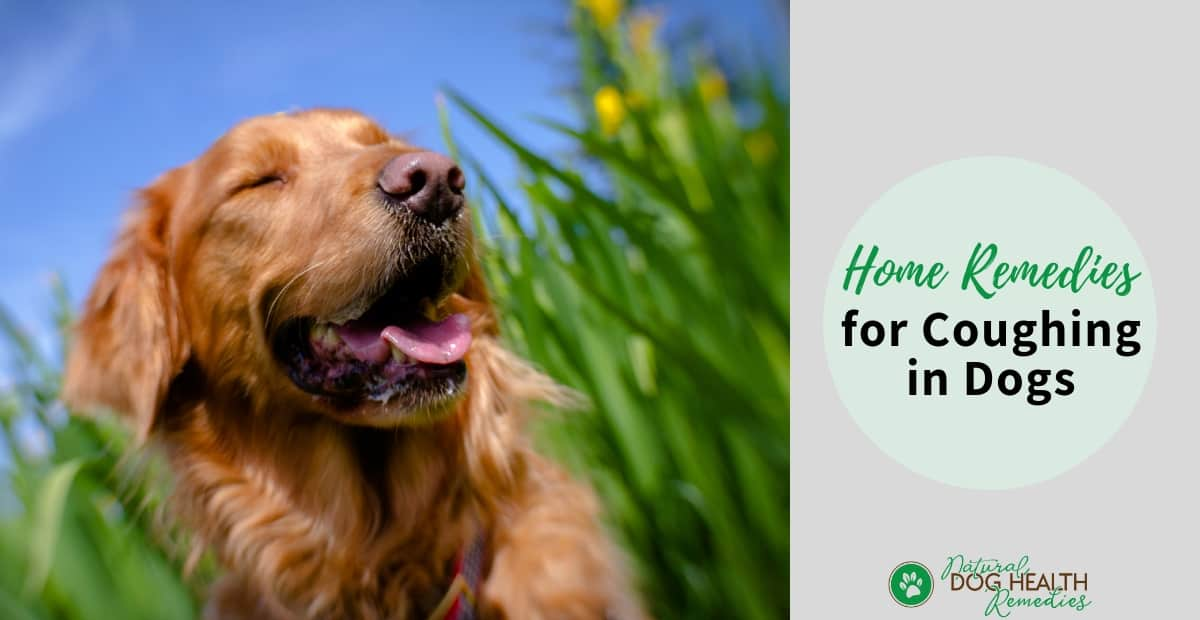 Natural Remedies for Dog Coughing