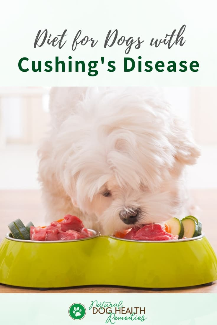Dog Cushings Diet & Supplements