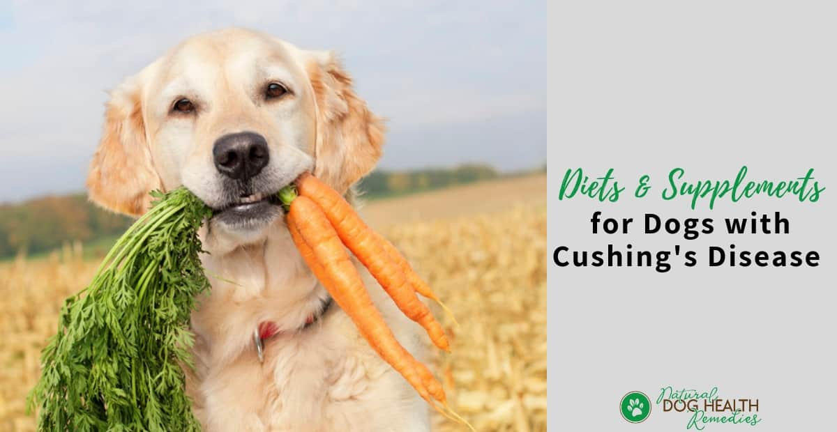 Dog Cushings Diet