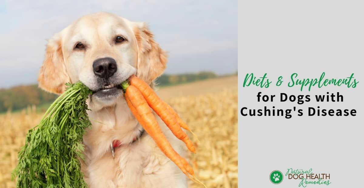 Dog Cushings Diet