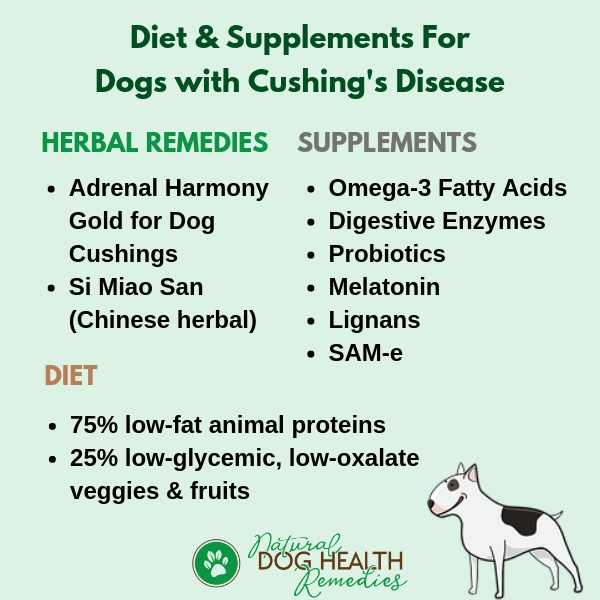 Canine Cushings Disease Recommended Diet & Supplements