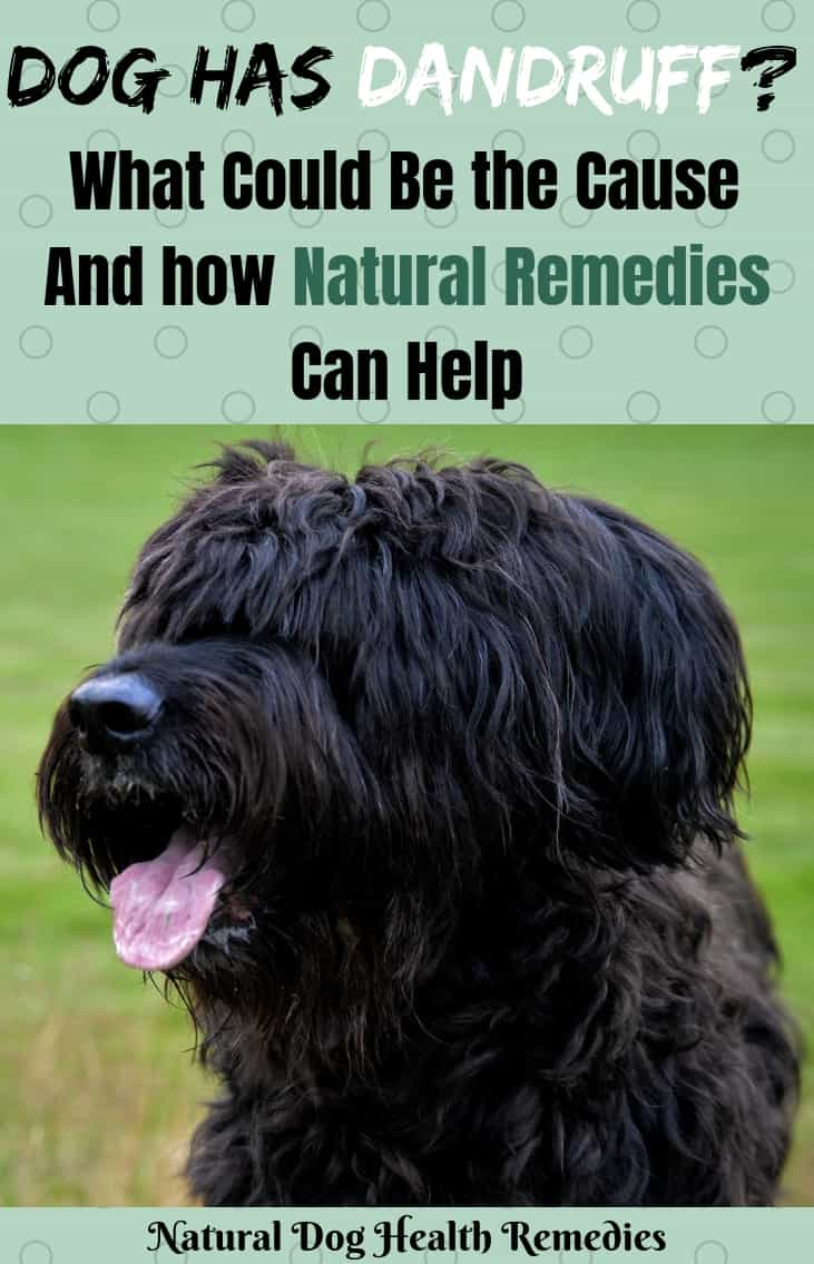 Dog Dandruff Home Remedies
