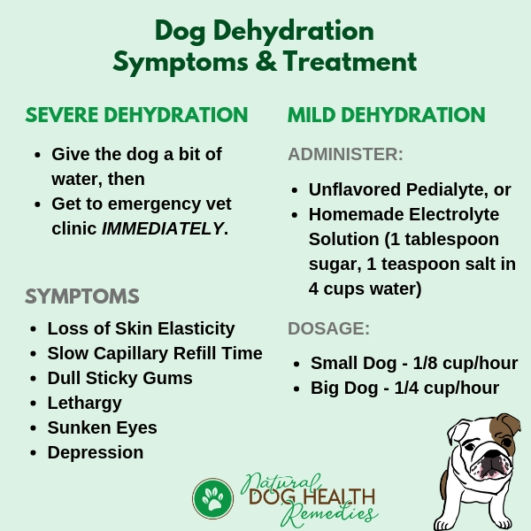 Dog Dehydration Symptoms & Treatment