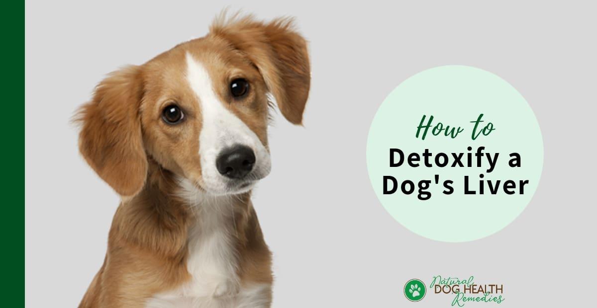 Dog Detox
