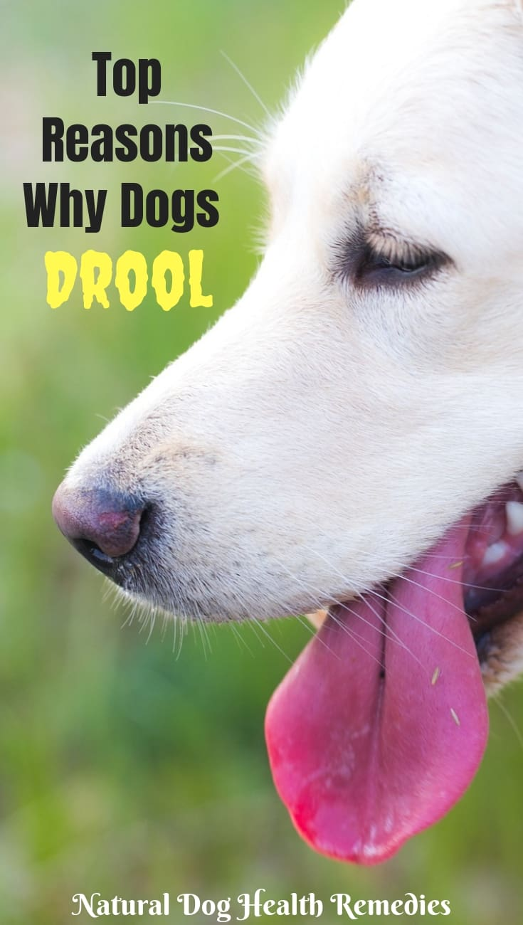 Excessive Dog Drooling