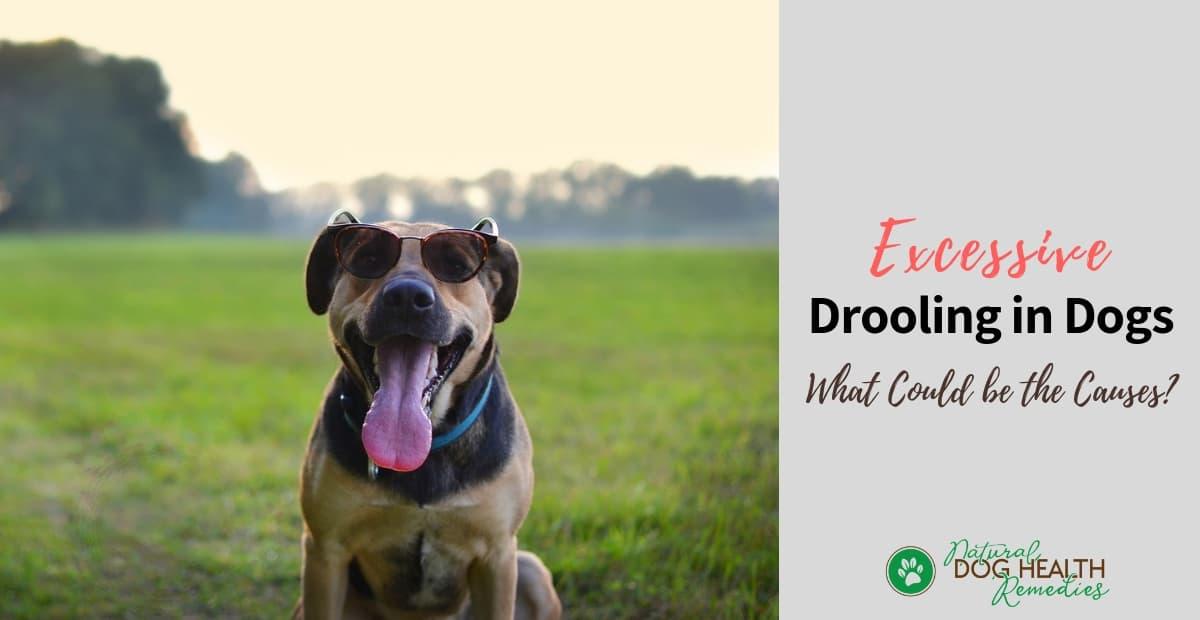 Dog Drooling