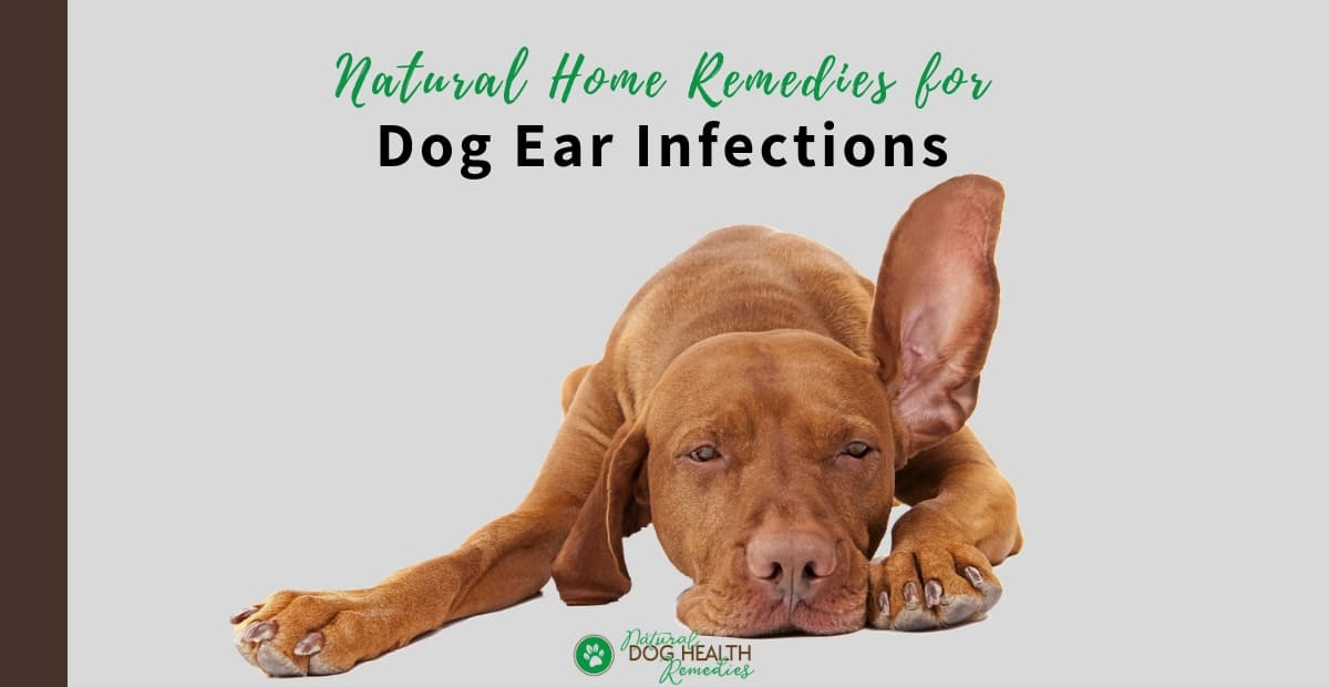 Natural Remedies for Dog Ear Infections