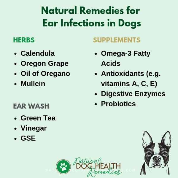 Natural Home Remedies for Dog Ear Infections