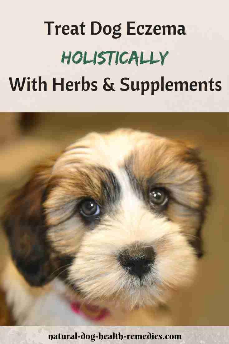 Dog Eczema Natural Remedies