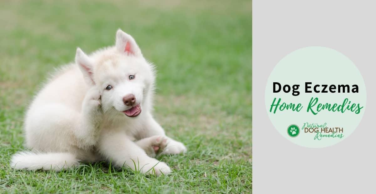 Dog Eczema