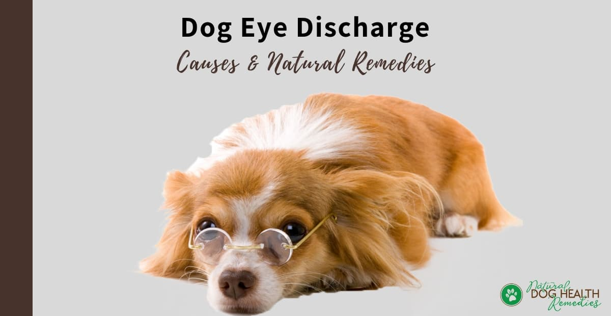 Dog Eye Discharge