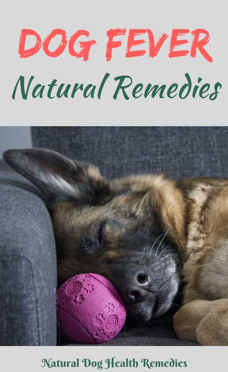 Dog Fever Natural Treatment