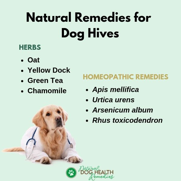 Natural Remedies for Dog Hives