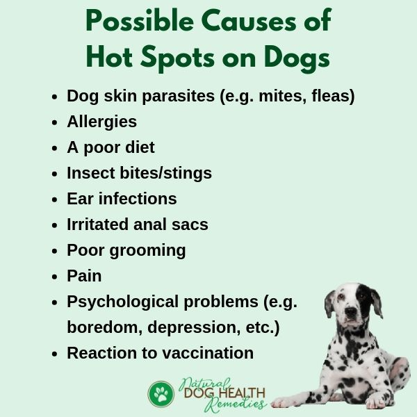 Dog Hot Spots Causes