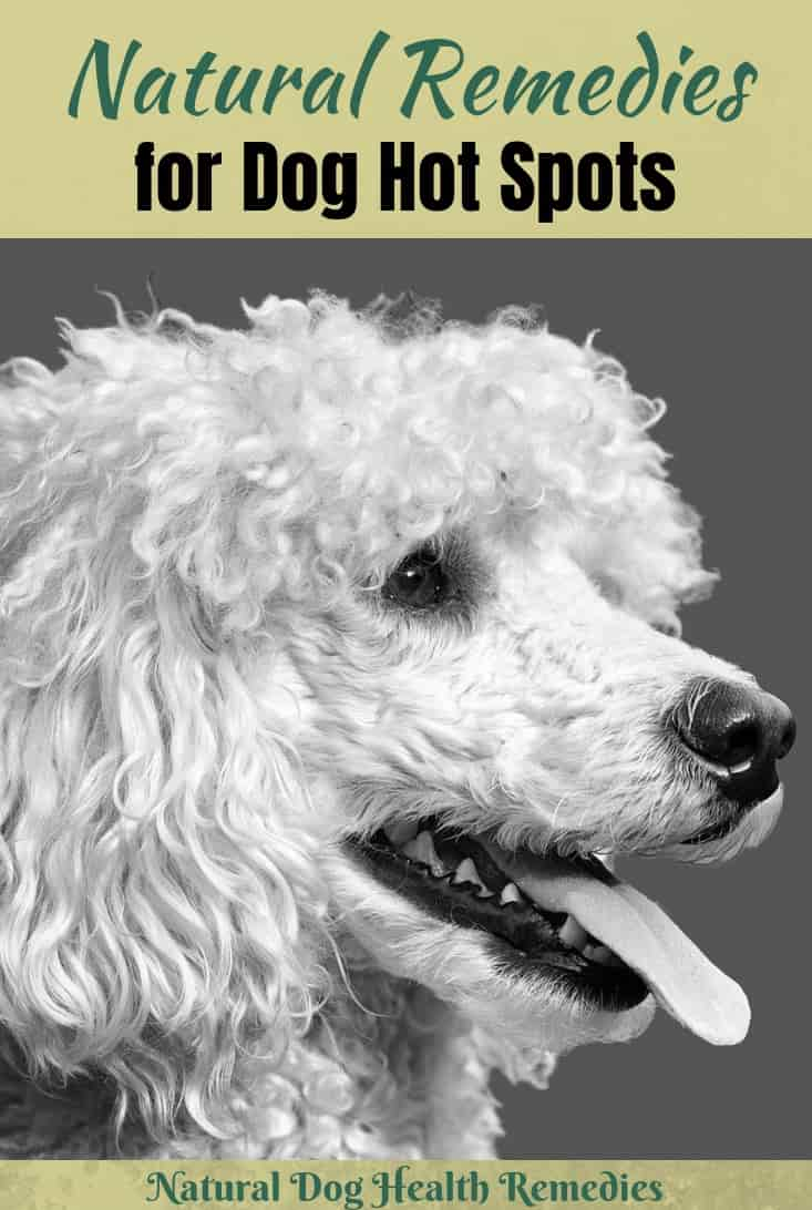 Natural Dog Hot Spots Remedies