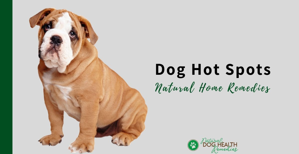 Dog Hot Spots Remedies