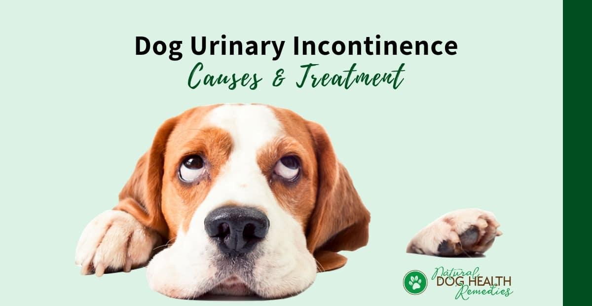 Dog Incontinence